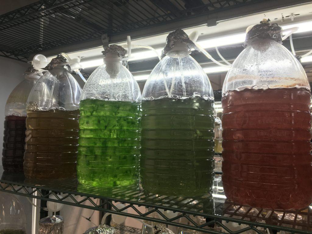 Colores de alga: ¿el futuro de la moda?